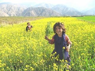 「アフガンに緑の大地を」 伊藤和也君 追悼写真展